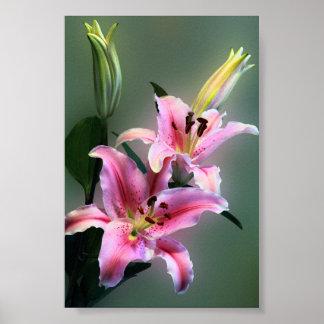 Lilium Bouquet Print