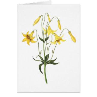 Lilium canadense card