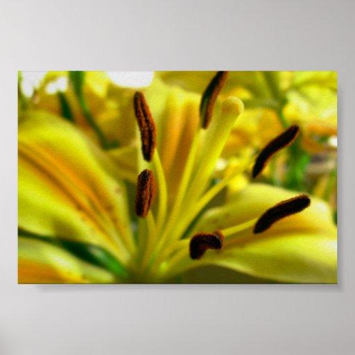Lilium Impresiones