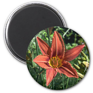 Lilium magnet