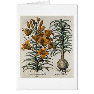 Lilium purpureum mauis Do danei and Scapus cum bul Card