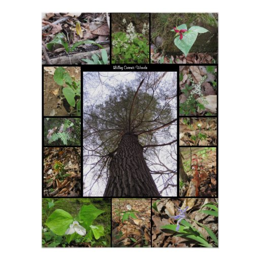 Lilley Cornett Woods Collage Poster