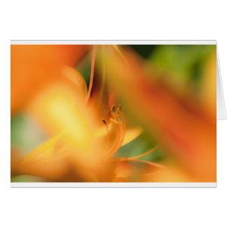 lilli card