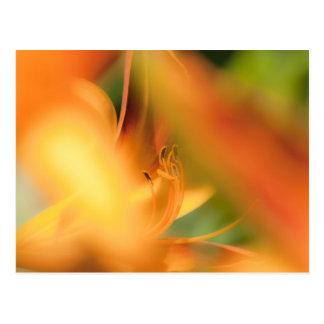 lilli postcard