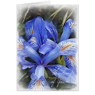 Lillie's-Thinking of You Card