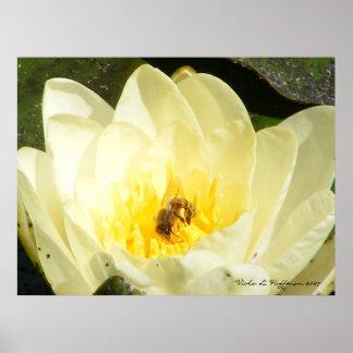 Lillie Flower Poster