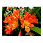 Lillies anaranjado florece @ Funchal, Portugal Tarjeta Postal