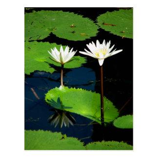 Lillies del agua, EL Golfete, Guatemala Tarjeta Postal