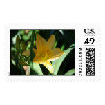 Lillies of Georgia Stamps
