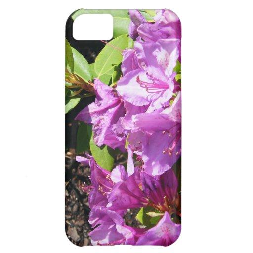 Lillies púrpura