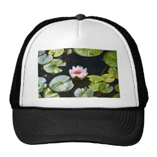 Lilly and Lotus Mesh Hat