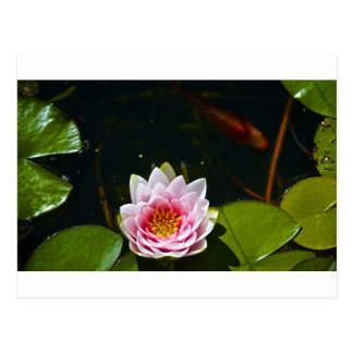 Lilly and Lotus Postcard