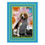 Lilly - beagle -2F Postal