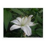 Lilly blanco en la postal del espacio en blanco de