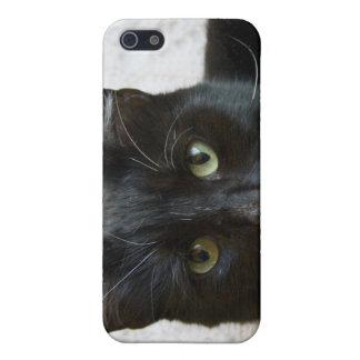 Lilly el caso del iphone del gato iPhone 5 protector