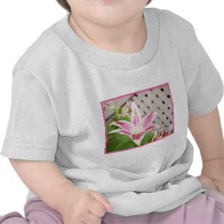 Lilly for a Cure... Breast Cancer Awareness T Shirts