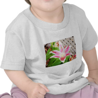 Lilly for a Cure Breast Cancer Awareness Tee Shirts