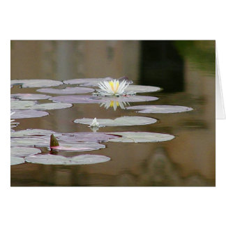 Lilly Lillies Ponds Lillypads Card