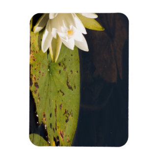 Lilly Pad Magnet