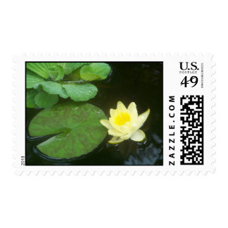 Lilly Pad Postage