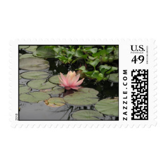 lilly pad stamp