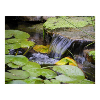Lilly Pad Waterfall Poster