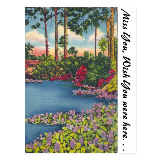 Lilly Pond, Florida Postcard