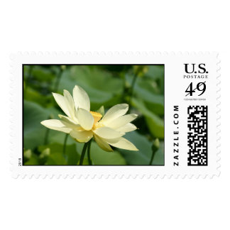 lilly postage