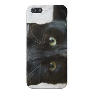 Lilly the Cat iphone Case