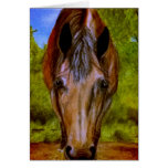 Lilly Twin Oaks Sanctuary Notecards Greeting Cards