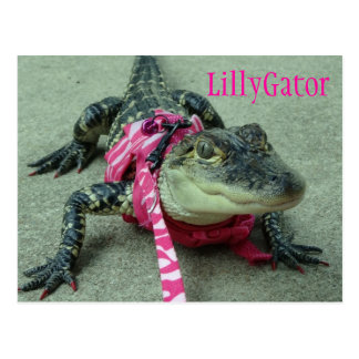 LillyGator Alligator Rescue Postcard