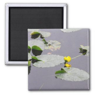 Lillypads 2 Inch Square Magnet