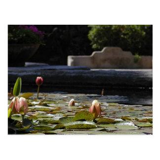 Lillypads Waterlily Postcard