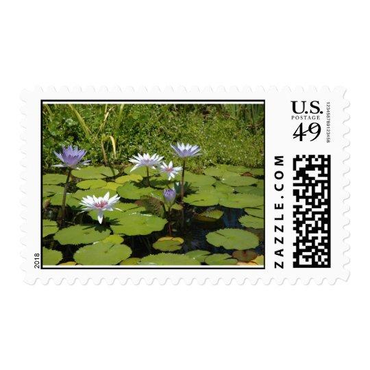Lillypond Postage