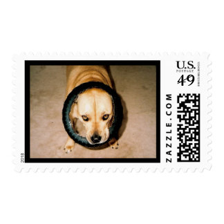 Lilo in Tire Postage