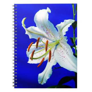 lily-227836  lily flower royal blue background nat notebooks