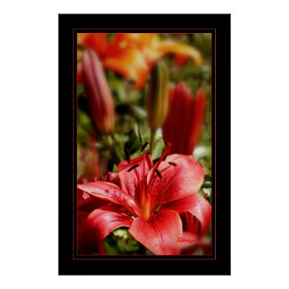 Lily 23x35 poster