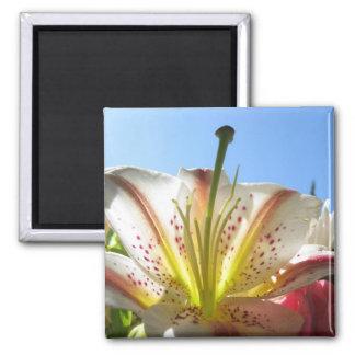 Lily 2 fridge magnets