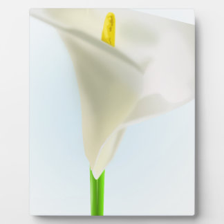 lily-33575 lily flower calla bloom cartoon drawing photo plaques