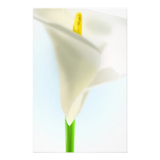 lily-33575 lily flower calla bloom cartoon drawing stationery design