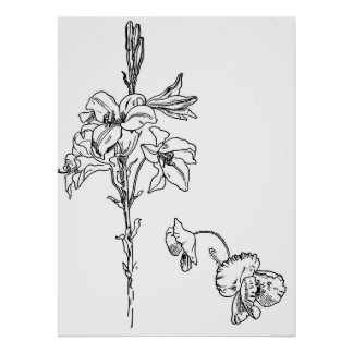Lily and Poppy Flower Line Drawing Poster