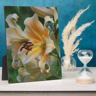 Lily Blossoms  Plaque