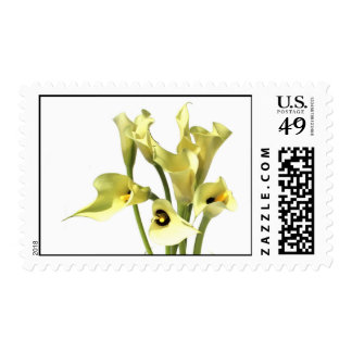 Lily bouquet Calla Lily flower on white background Postage
