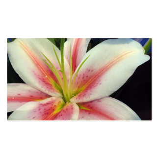 Lily Business Cards