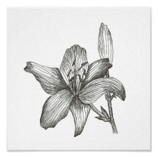 Lily Drawing by Julia Morrill Print