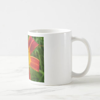 lily,fire color day lily coffee mugs