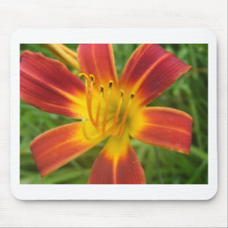 lily,fire color day lily mouse pad