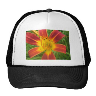 lily,fire color day lily trucker hat