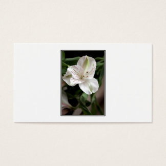 Lily Flower. Business Card