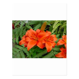 Lily flower - Iridescent orange (Matt 28-30) Postcard